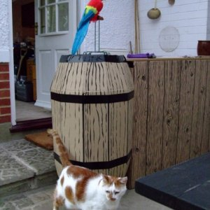 Charlie the cat inspects the bar of that notorious tavern and smugglers' haunt, The Dead Parrot inn.