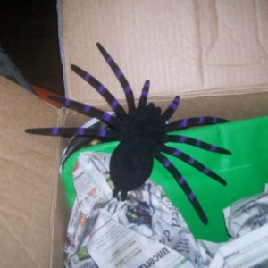 creepy spider..his buddy is still in the box...